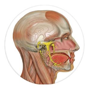 maxilofacial Clínica dental Rehberger López-Fanjul Tu dentista en Oviedo